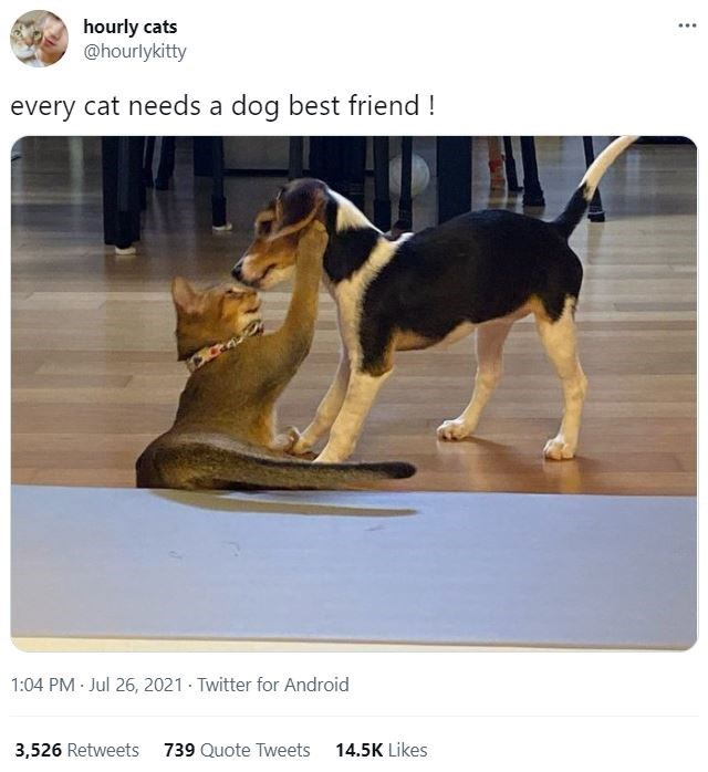 Dog - hourly cats @hourlykitty every cat needs a dog best friend ! 1:04 PM Jul 26, 2021 Twitter for Android 3,526 Retweets 739 Quote Tweets 14.5K Likes