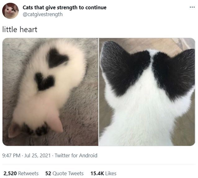 Cat - Cats that give strength to continue @catgivestrength little heart 9:47 PM Jul 25, 2021 · Twitter for Android 2,520 Retweets 52 Quote Tweets 15.4K Likes