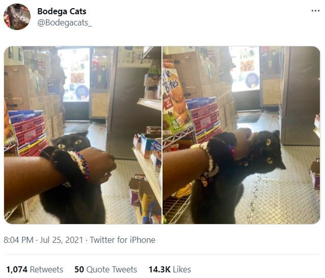 Fashion - Bodega Cats @Bodegacats_ .... Btes 8:04 PM Jul 25, 2021 · Twitter for iPhone 1,074 Retweets 50 Quote Tweets 14.3K Likes