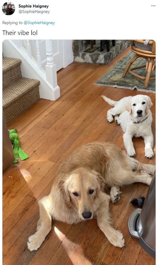 Dog - Sophie Haigney @SophieHaigney ... Replying to @SophieHaigney Their vibe lol