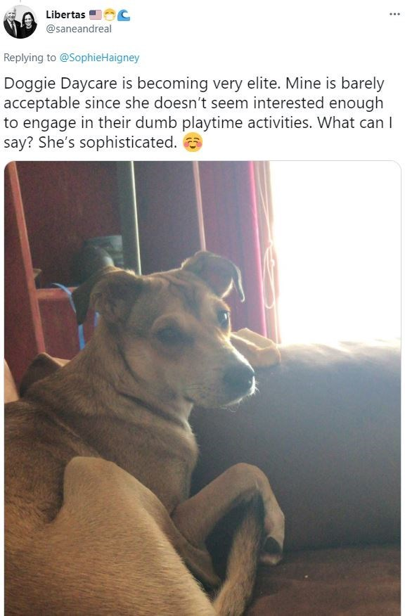 Dog - Libertas ... @saneandreal Replying to @SophieHaigney Doggie Daycare is becoming very elite. Mine is barely acceptable since she doesn't seem interested enough to engage in their dumb playtime activities. What can I say? She's sophisticated.