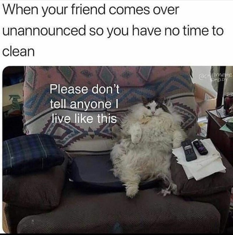 Textile - When your friend comes over unannounced so you have no time to clean Gmeme Please don't tell anyone I live like this