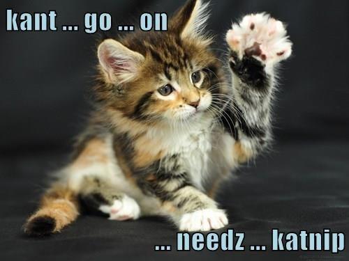 Cat - kant .. go ... On .. needz.. katnip