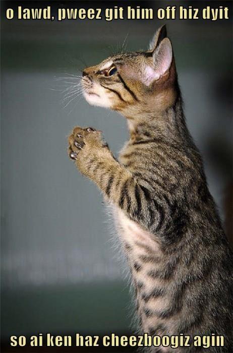 Cat - o lawd, pweez git him off hiz dyit so ai ken haz cheezboogiz agin