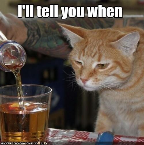 Cat - I'll tell you when. ICANHASCHEEZEURGER.COM E
