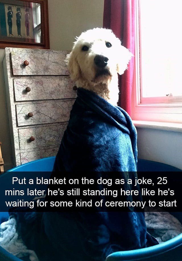 Dog - Put a blanket on the dog as a joke, 25 mins later he's still standing here like he's waiting for some kind of ceremony to start