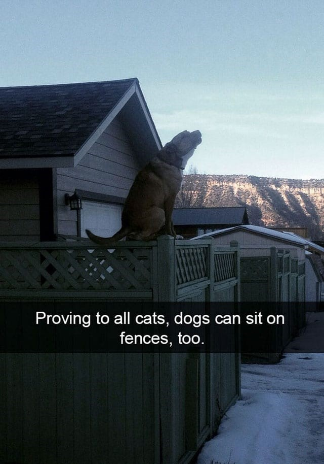 Sky - Proving to all cats, dogs can sit on fences, too.
