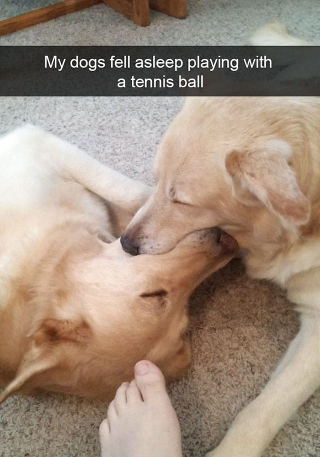 Dog - My dogs fell asleep playing with a tennis ball