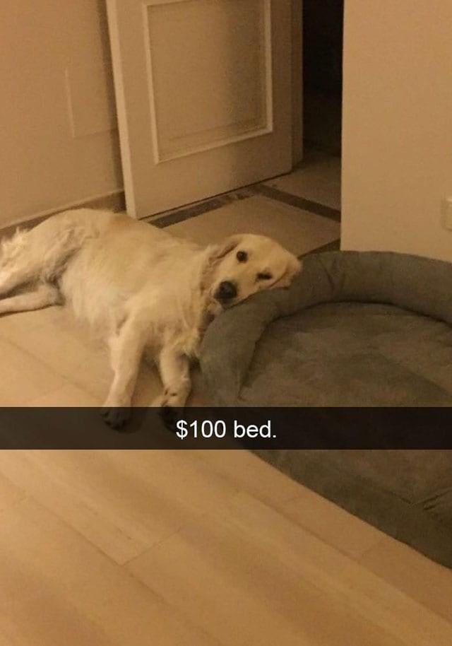 Dog - $100 bed.