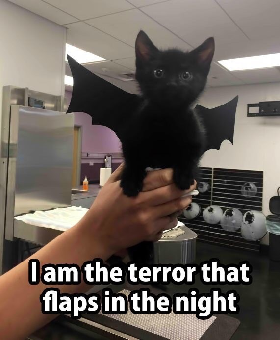 Cat - lam the terror that flaps in the night