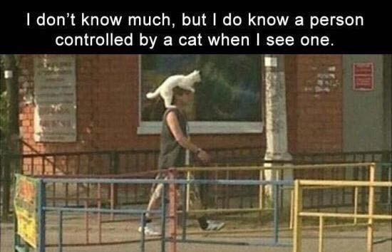 Human - I don't know much, but I do know a person controlled by a cat when I see one.