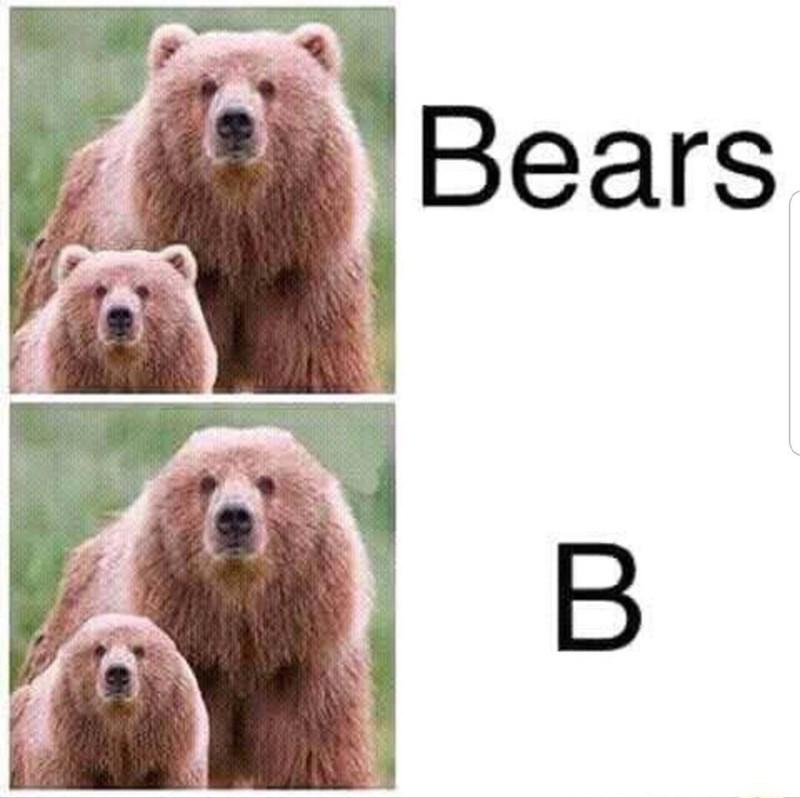 Vertebrate - Bears