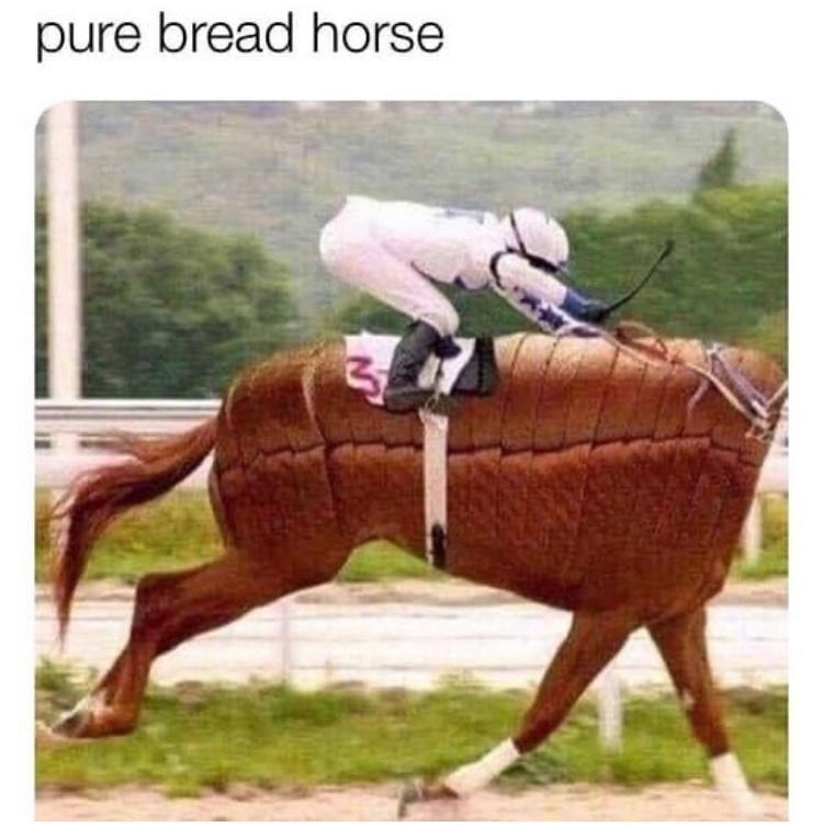 Helmet - pure bread horse