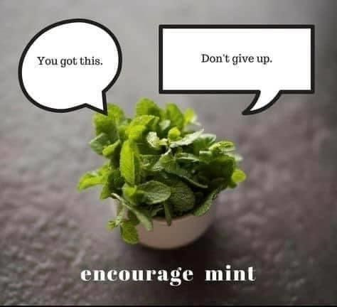 Plant - You got this. Don't give up. encourage mint