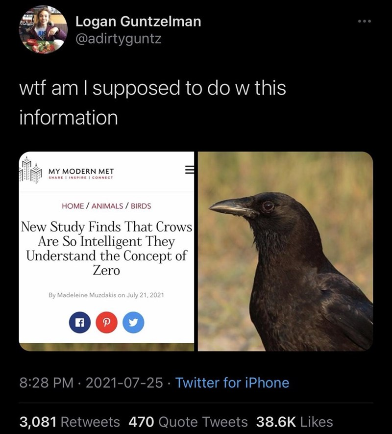 Bird - Logan Guntzelman @adirtyguntz ... wtf am I supposed to do w this information MY MODERN MET SHARE I INSPIRE I CONNECT HOME / ANIMALS / BIRDS New Study Finds That Crows Are So Intelligent They Understand the Concept of Zero By Madeleine Muzdakis on July 21, 2021 P 8:28 PM · 2021-07-25 · Twitter for iPhone 3,081 Retweets 470 Quote Tweets 38.6K Likes