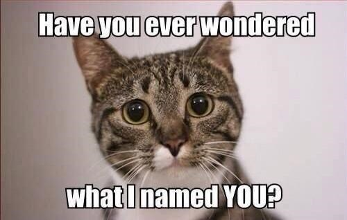 Cat - Have you ever wondered what I named YOU?
