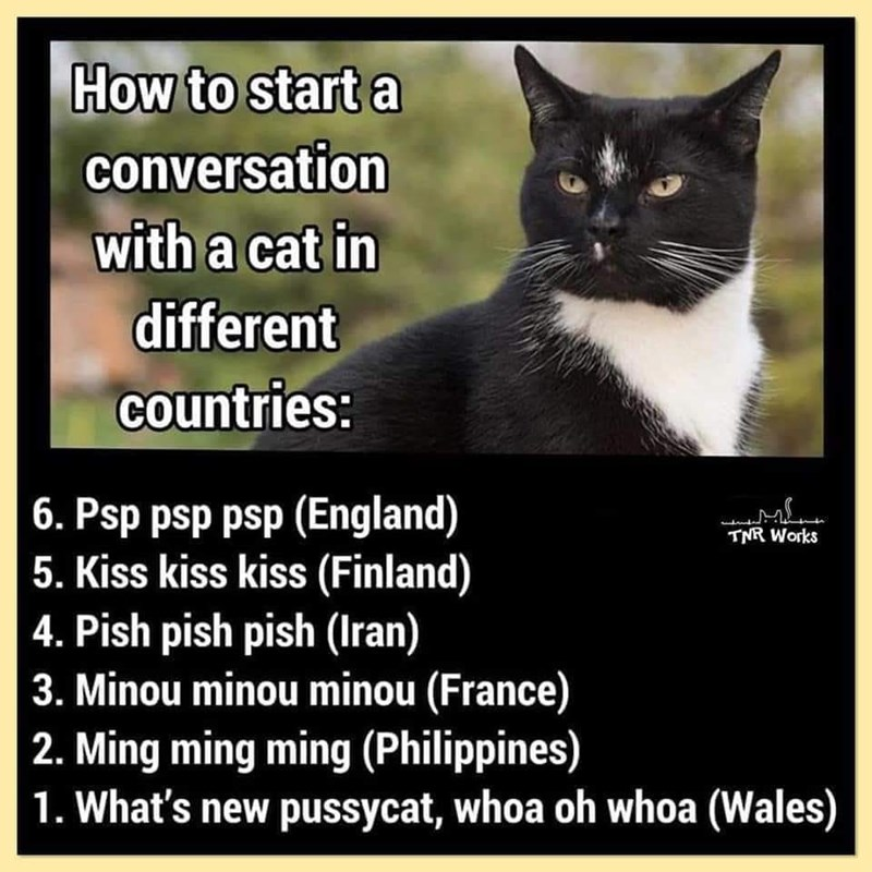Cat - How to start a conversation with a cat in different countries: 6. Psp psp psp (England) 5. Kiss kiss kiss (Finland) 4. Pish pish pish (Iran) 3. Minou minou minou (France) 2. Ming ming ming (Philippines) 1. What's new pussycat, whoa oh whoa (Wales) TNR Works