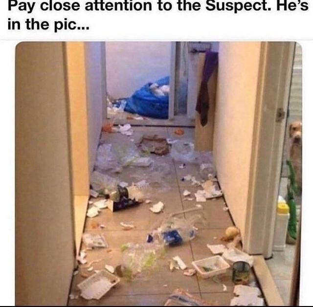 Wood - Pay close attention to the Suspect. He's in the pic...
