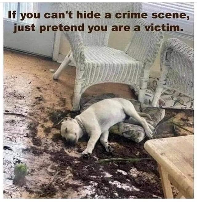 Dog - If you can't hide a crime scene, just pretend you are a victim.