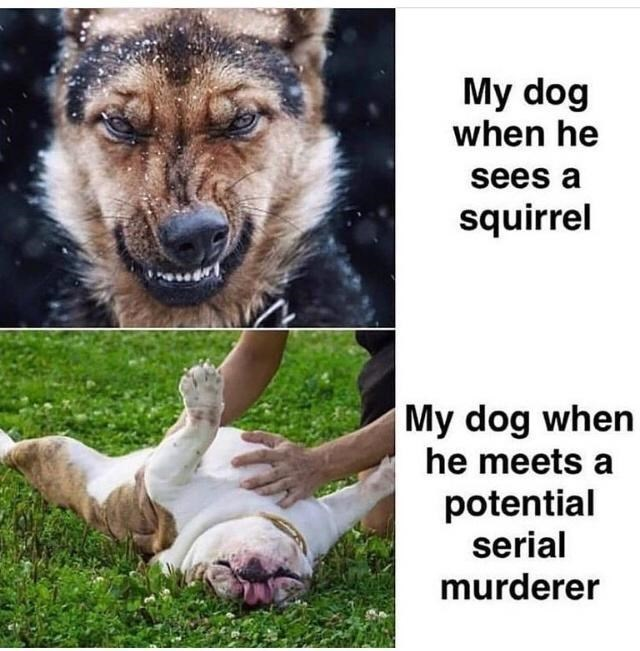 Dog - My dog when he sees a squirrel My dog when he meets a potential serial murderer