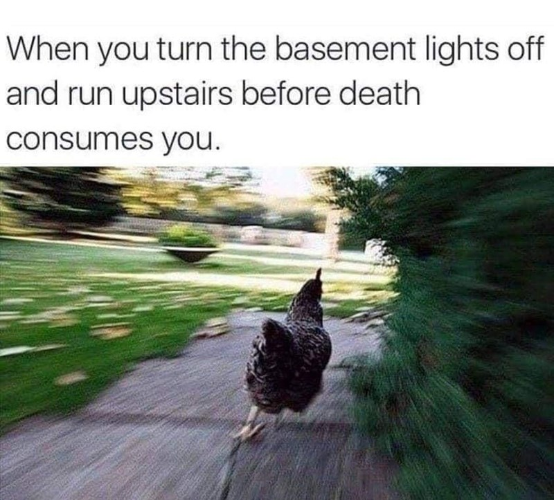 Bird - When you turn the basement lights off and run upstairs before death consumes you.