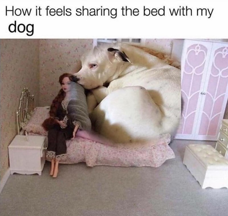 Dog - How it feels sharing the bed with my dog