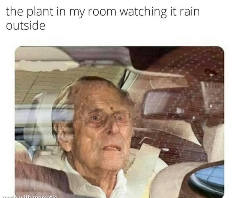 Car - the plant in my room watching it rain outside media with mematic