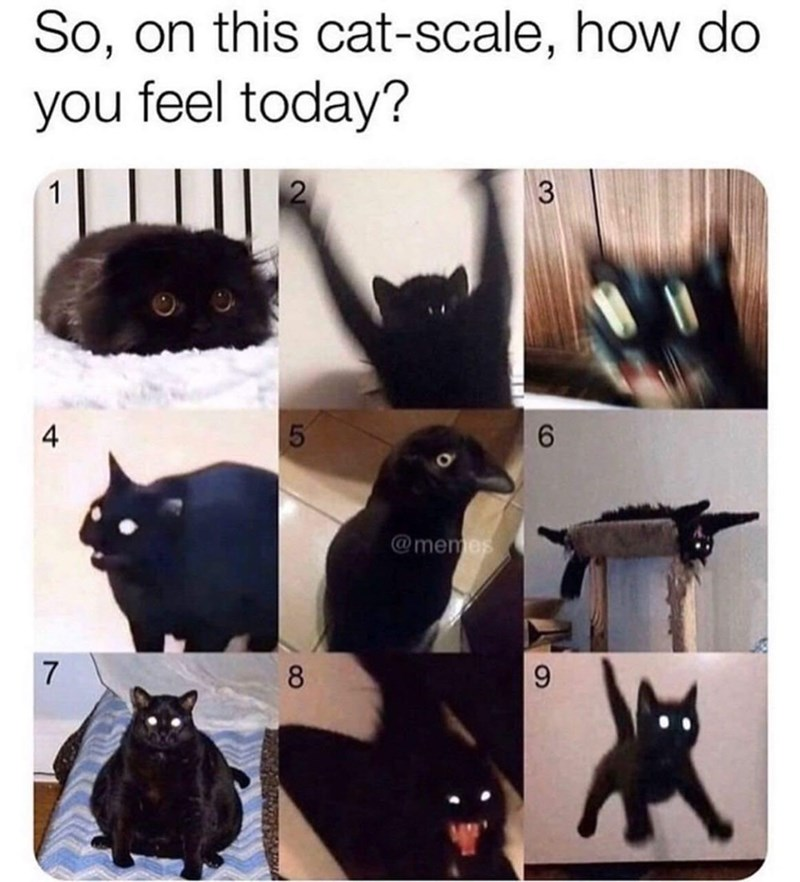Photograph - So, on this cat-scale, how do you feel today? 1 4 6. @memes 7 8 90