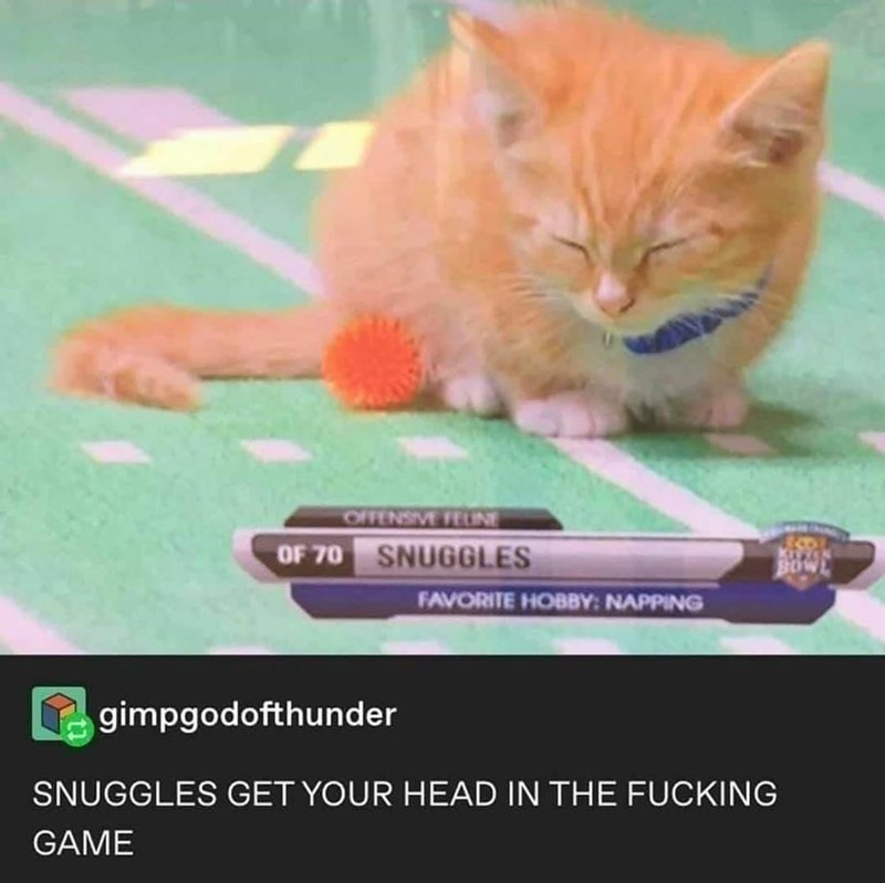 Cat - OFFENSIVE FUNE OF 70 SNUGGLES 8OW FAVORITE HOBBY: NAPPING gimpgodofthunder SNUGGLES GET YOUR HEAD IN THE FUCKING GAME