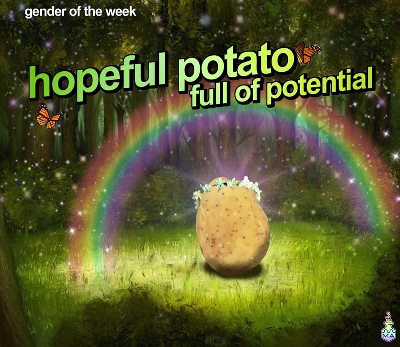 Rainbow - gender of the week hopeful potato full of potential MA