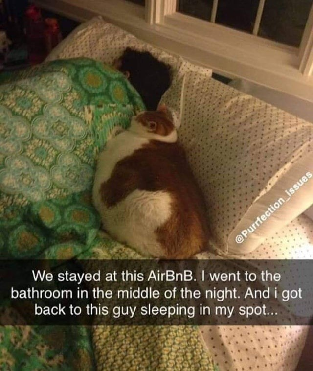 Cloud - We stayed at this AirBnB. I went to the @Purrfection_issues bathroom in the middle of the night. And i got back to this guy sleeping in my spot...