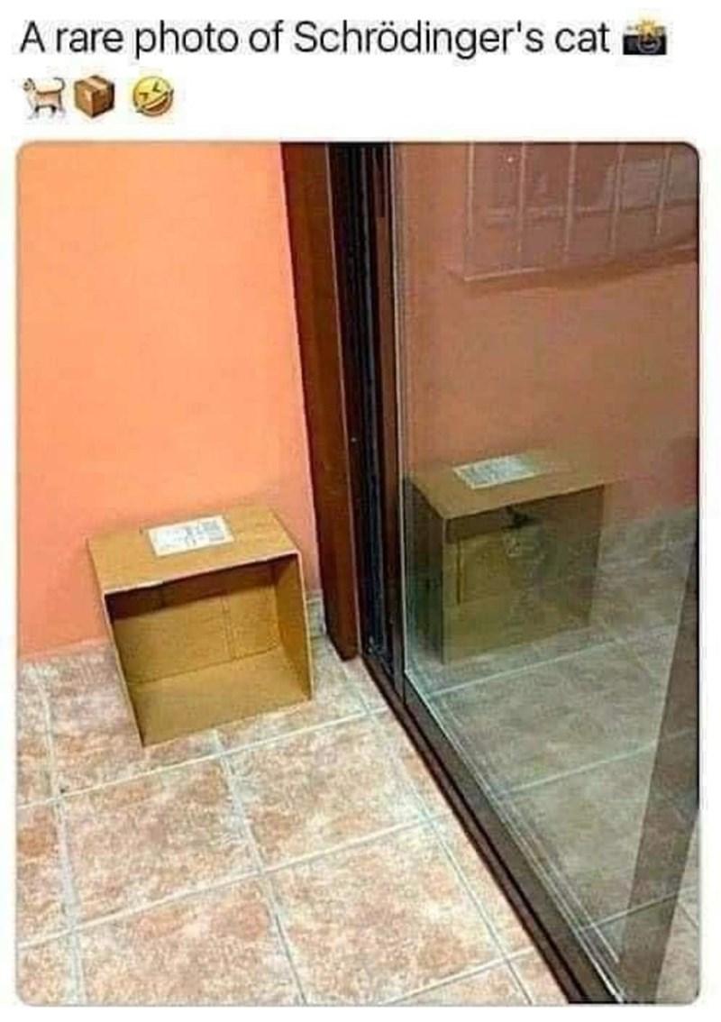 Door - A rare photo of Schrödinger's cat