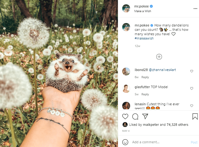 Plant - mr.pokee Make a Wish mr.pokee e How many dandelions can you count? D*. that's how many wishes you have! #makeawish 12w ibond28 @zhannalives4art 6w Reply glasfutter TOP Model Sw Reply lenasin Cutest thing I've ever Seen!! Liked by maikpeter and 74,328 others MAY 4 Add a comment. Post