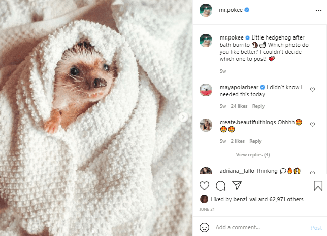Organism - mr.pokee ... mr.pokee Little hedgehog after bath burrito D9 which photo do you like better? I couldn't decide which one to post! Sw mayapolarbear O I didn't know I needed this today Sw 24 likes Reply create.beautifulthings Ohhhhe Sw 2 likes Reply View replies (3) adriana_lallo Thinking pOA Liked by benzi_val and 62,971 others JUNE 21 Add a comment. Post