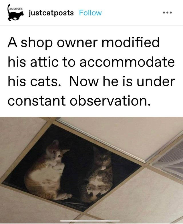 Cat - JUSTCATPOSTS justcatposts Follow A shop owner modified his attic to accommodate his cats. Now he is under constant observation.