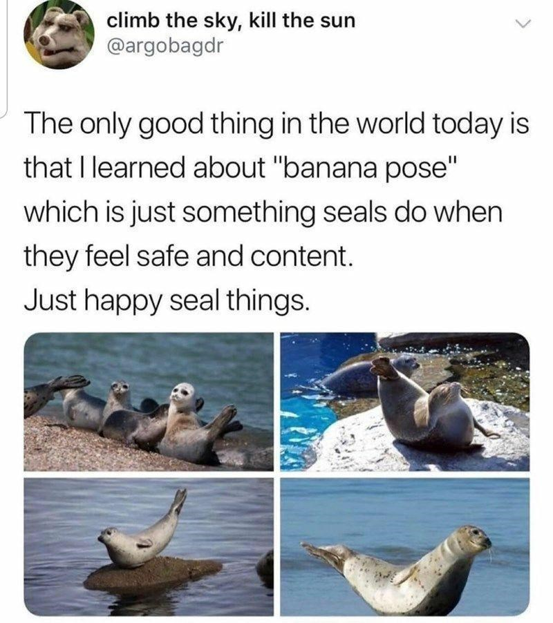 """Photograph - climb the sky, kill the sun @argobagdr The only good thing in the world today is that I learned about """"banana pose"""" which is just something seals do when they feel safe and content. Just happy seal things."""