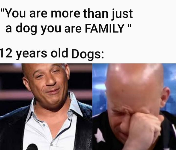 """Forehead - """"You are more than just dog you are FAMILY """" a 12 years old Dogs:"""