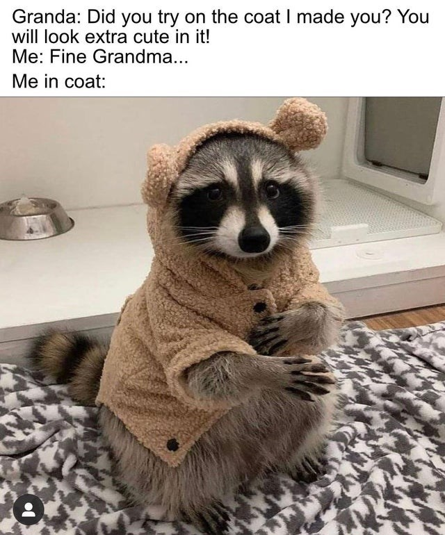 Carnivore - Granda: Did you try on the coat I made you? You will look extra cute in it! Me: Fine Grandma... Me in coat: