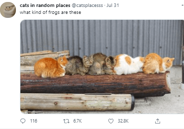 Cat - cats in random places @catsplacesss - Jul 31 what kind of frogs are these O 116 17 6.7K O 32.8K