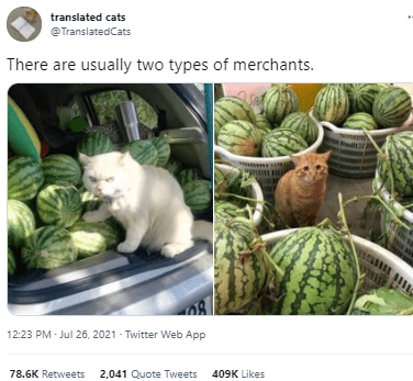 Food - translated cats @TranslatedCats There are usually two types of merchants. 12:23 PM - Jul 26, 2021 - Twitter Web App 78.6K Retweets 2,041 Quote Tweets 409K Likes
