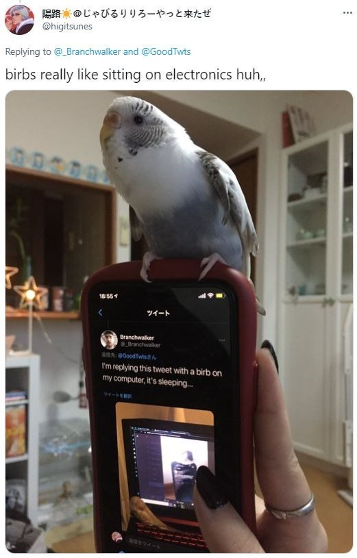 Bird - 陽路@じゃびるりりろーやっと来たぜ @higitsunes ... Replying to @ Branchwalker and @GoodTwts birbs really like sitting on electronics huh, 18:554 ツイート Branchwalker Branchwalker aA Goodtwts h I'm replying this tweet with a birb on my computer, it's sleeping... ワイート