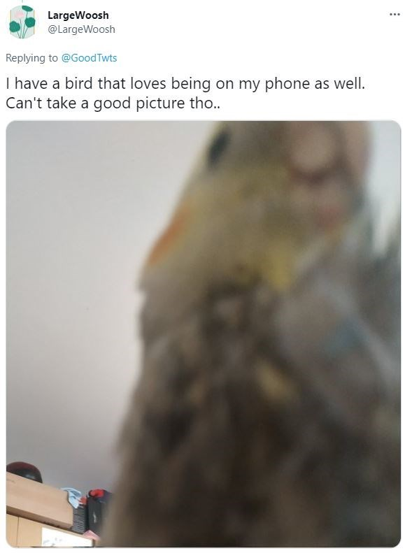 Organism - LargeWoosh @LargeWoosh ... Replying to @Good Twts I have a bird that loves being on my phone as well. Can't take a good picture tho..