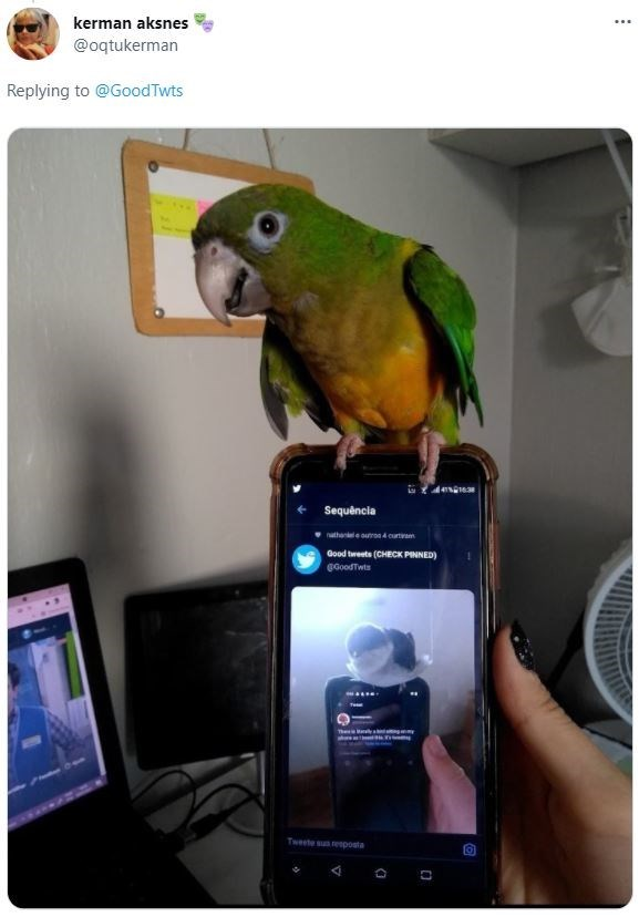 Bird - kerman aksnes ... @oqtukerman Replying to @GoodTwts Sequência natheneleuon4 curtvam Good tweets (CHECK PINNED) @GoodTwts Tweete suresposta