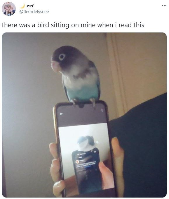 Hand - cri ... @fleurdelyseee there was a bird sitting on mine when i read this