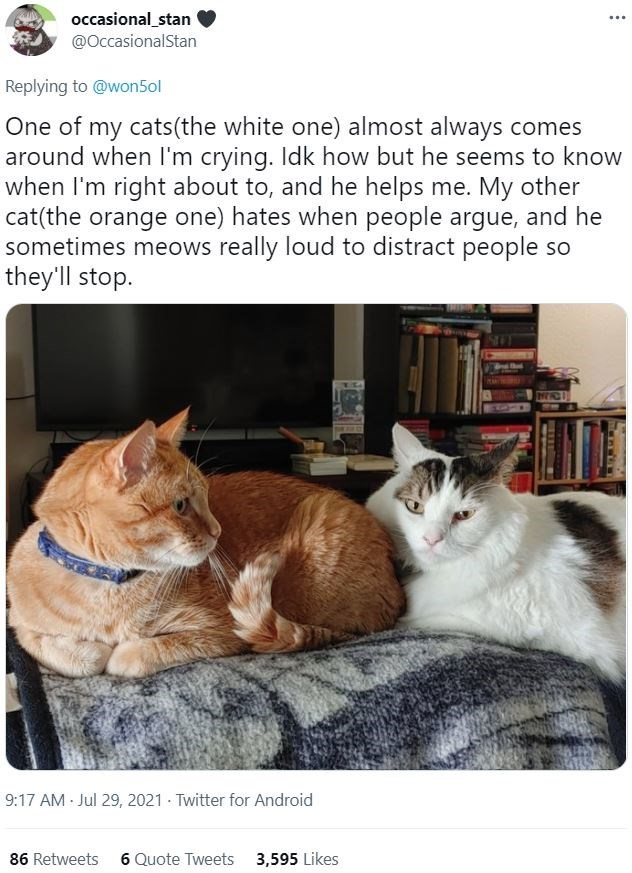 Cat - occasional_stan @OccasionalStan ... Replying to @won5ol One of my cats(the white one) almost always comes around when I'm crying. Idk how but he seems to know when I'm right about to, and he helps me. My other cat(the orange one) hates when people argue, and he sometimes meows really loud to distract people so they'll stop. 9:17 AM Jul 29, 2021 · Twitter for Android 86 Retweets 6 Quote Tweets 3,595 Likes