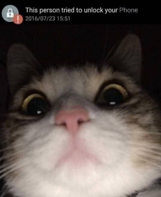 Cat - This person tried to unlock your Phone 2016/07/23 15:51