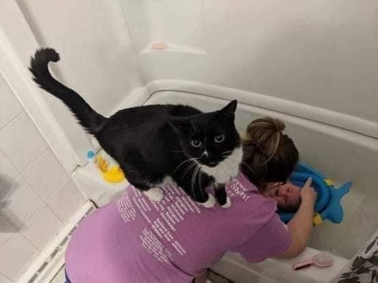 Cat - Shrt! Pedanapme