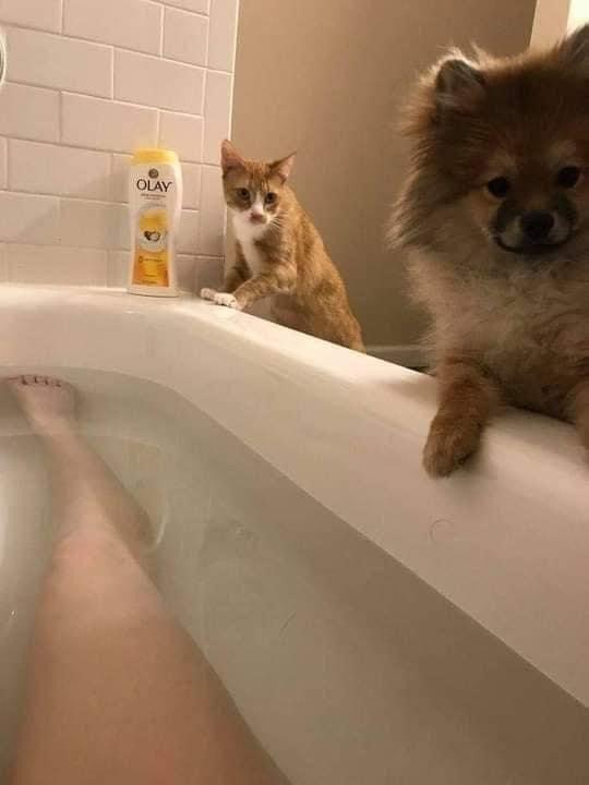 Bathtub - OLAY