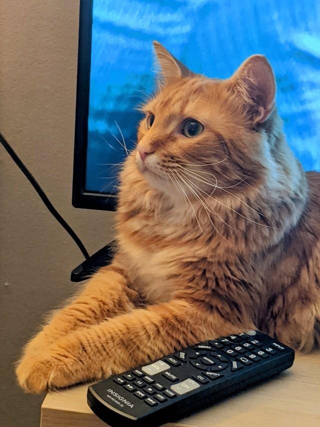 Cat - MUTE OL INSIGNIA APNOAS-B