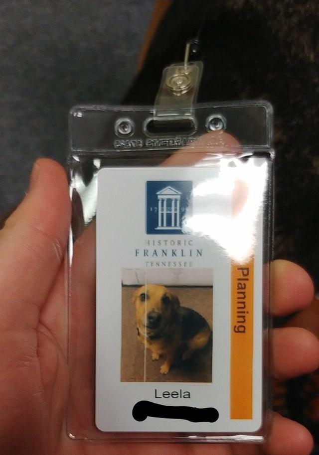Dog - HISTORIC FRANKLIN TENNESSEE Leela Planning
